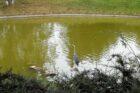 Reiher im Schweizer Garten
